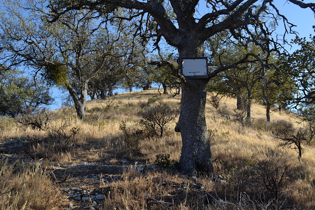 oaks and sign