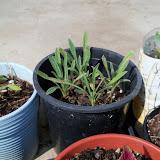 Gardening 2010, Part Two - 101_3452.JPG