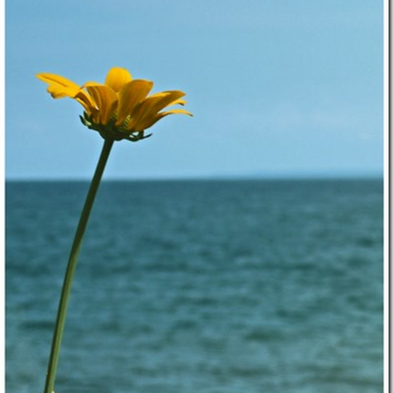 The Lone Flower…