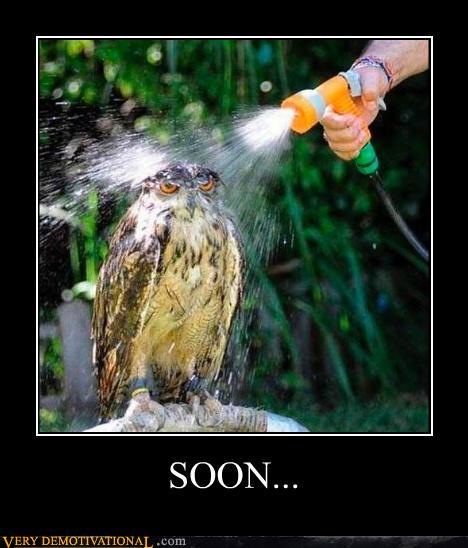 photo of an owl getting a shower and having a really mad-looking face
