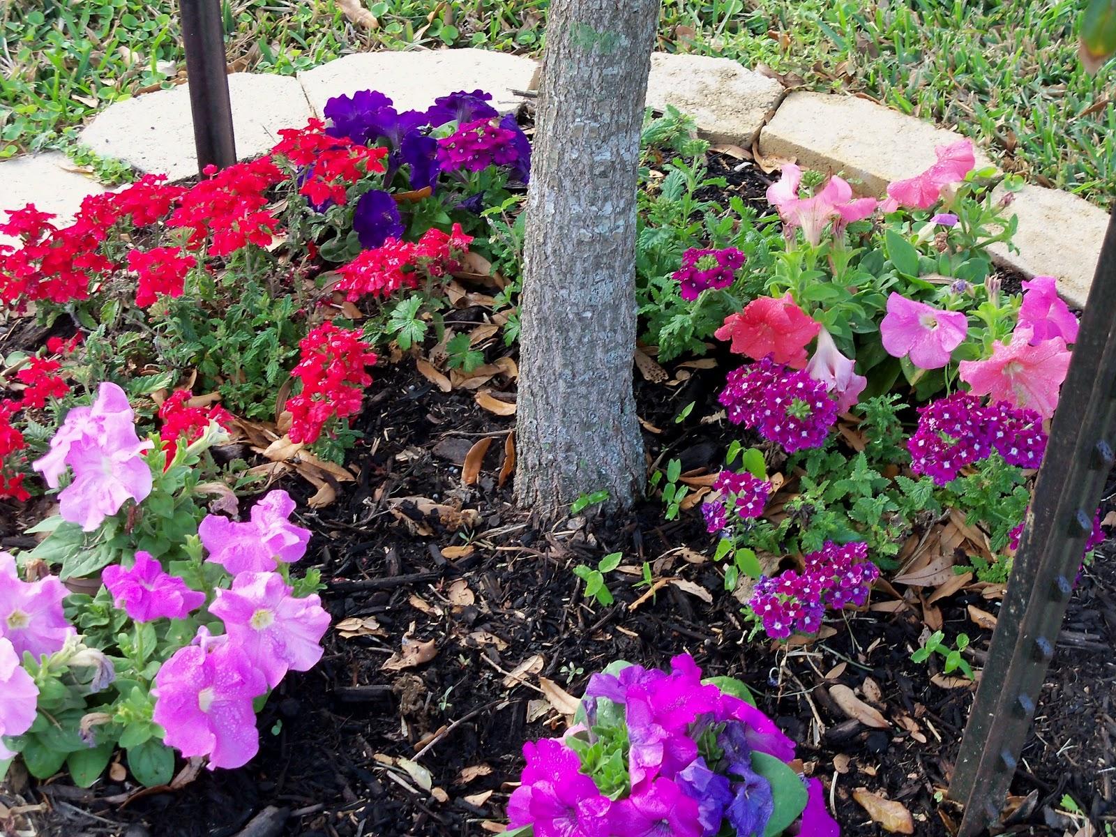 Gardening 2011 - 100_6864.JPG