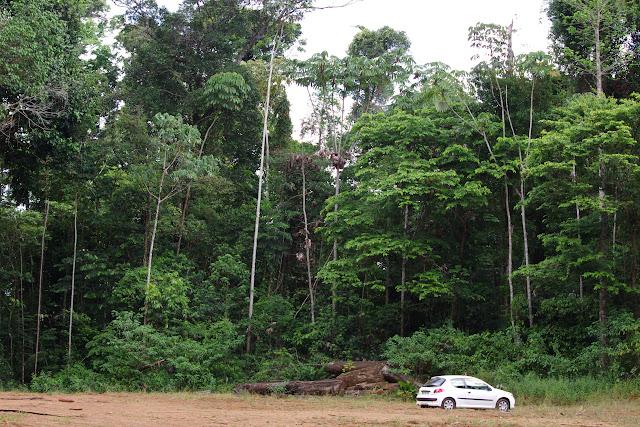 Premier layon, Patawa (Montagne de Kaw), 26 octobre 2012. Photo : J.-M. Gayman
