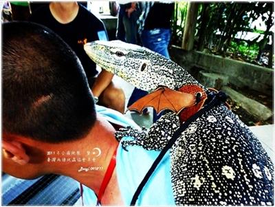 【爬聚】20110918.全國爬聚暨兩棲爬協年會 - 2011年 - 龜窩論壇年度全國性聚會照片區