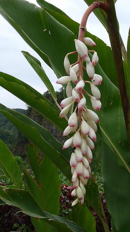 TAIWAN .Hualien 2009 LIYU lake Monet garden guest house - P1090725.JPG
