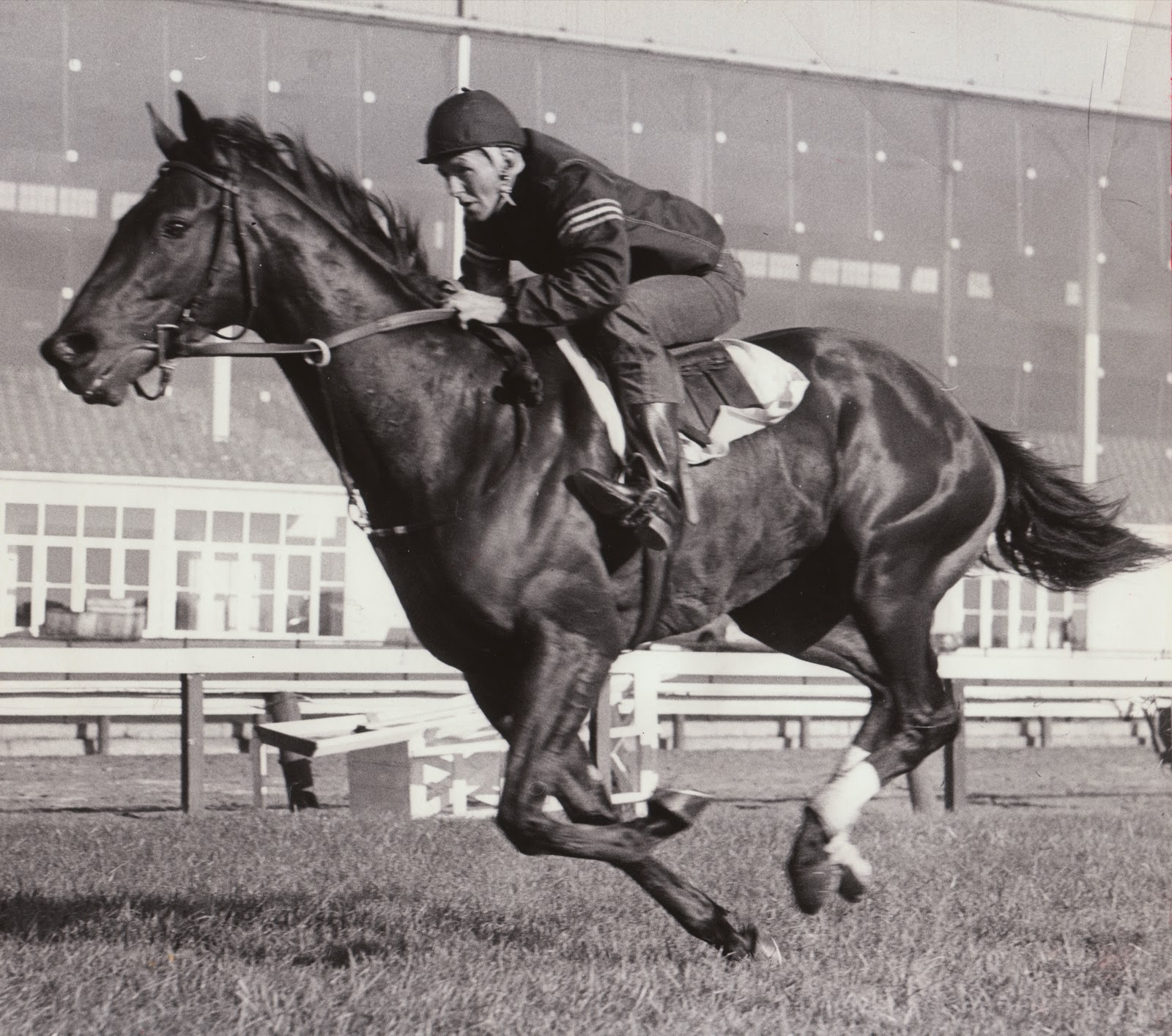 2011 the vault horse racing past and present page 5 damascus at work with willie davis up a champion in body and soul his courageous heart seemed to light up his eyes like an eternal flame falaconquin
