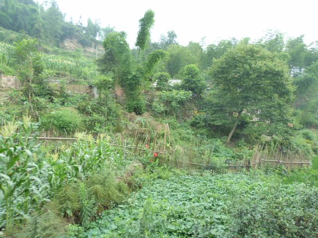 CHINE.SICHUAN.RETOUR A LESHAN - 1sichuan%2B1275.JPG