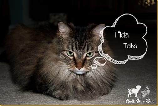 Tilda Talks-1