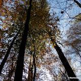 Barwy jesieni cz. 6: Las Wolski