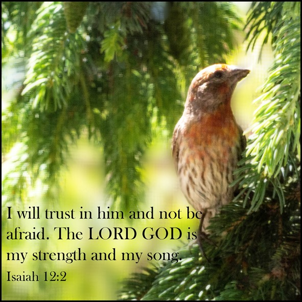 2018 Scripture and a Snapshot Week 23.  Isaiah 12:2