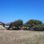 Greenough Flatlands.JPG