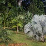 Jardin de palmiers près de la Rivière Comté. 23 novembre 2011. Photo : J.-M. Gayman
