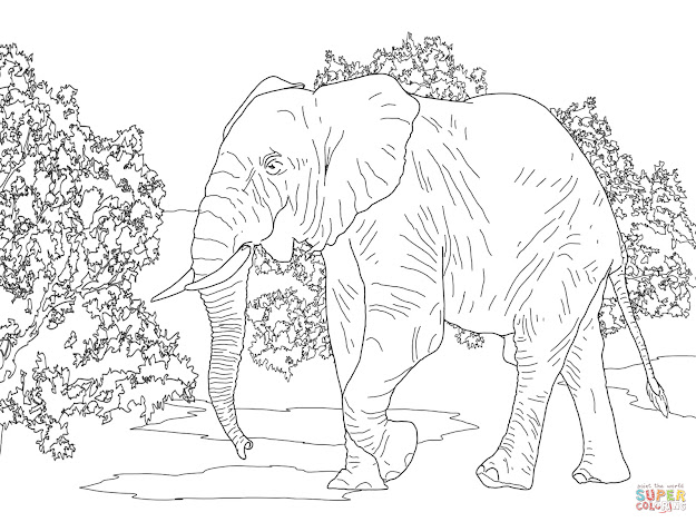 African Forest Elephant Walking Coloring Page From Elephants Category  Select From  Printable Crafts Of Cartoons Nature Animals Bible And  Many More