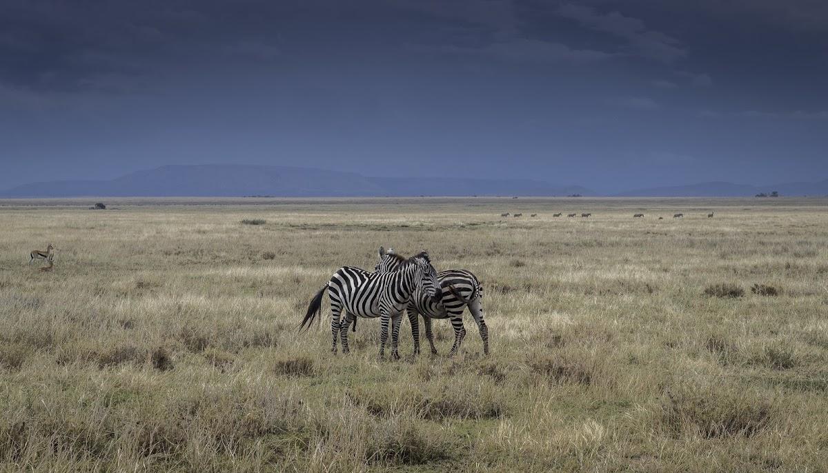 TanzaniaIMG_1123.jpg