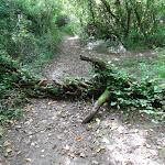 Obstacle sur le sentier
