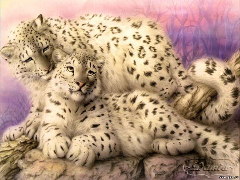 White Jaguars, Magical Landscapes 2