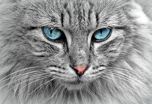 Jenis Jenis Kucing Paling Populer Di Dunia Duniahobiku Com