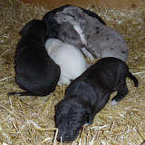 Serena's litter @ 3 weeks