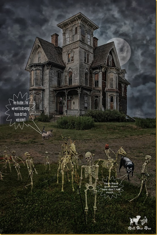 House of Hauntings Digital Background 10