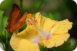 Комнатные растения - афродизиаки
