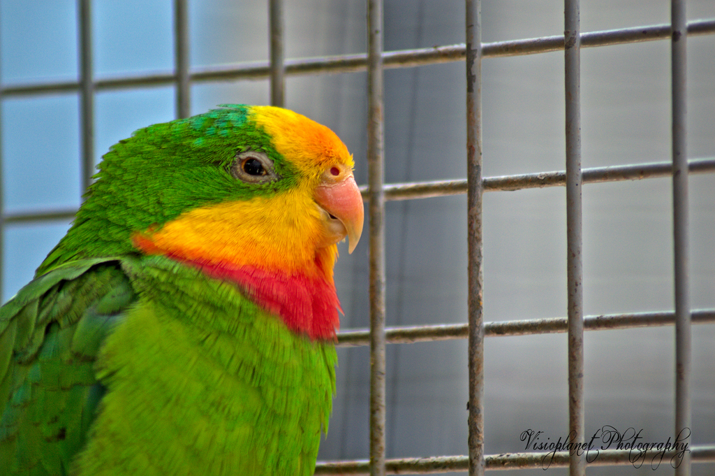 The true parrot by Sudipto Sarkar on Visioplanet