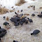 vogels%2520in%2520de%2520winter%2520009.jpg