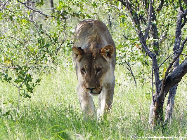 leon-ethosa-namibia.JPG