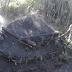 Incautan 18 mil sacos de carbón que serían enviado para Haití