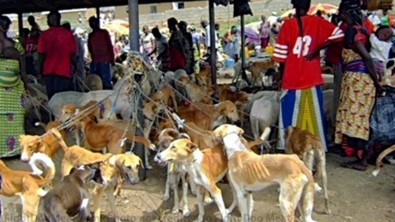 Over 9,000 sign petition to stop Nigerians from eating dogs