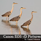 Canon Eos 7D pictures