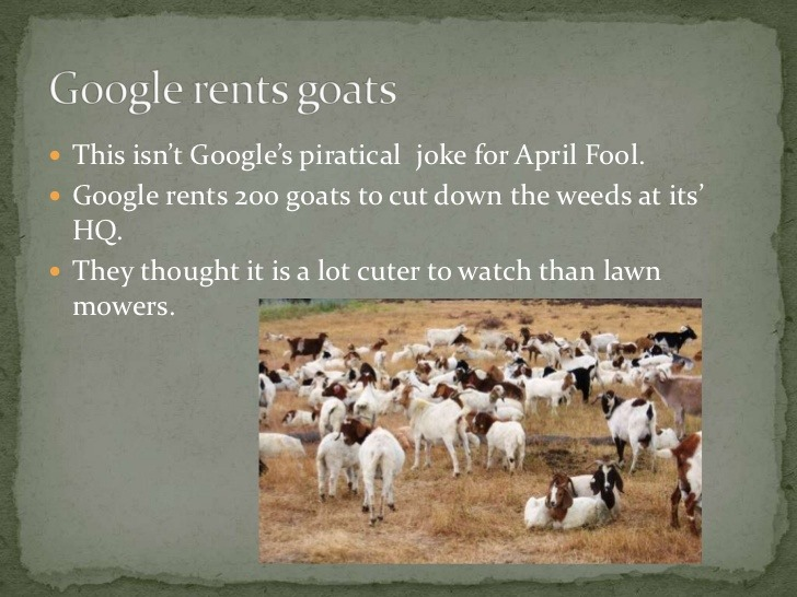 google renting goats to cut there hq grass