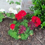 Gardening 2010 - 101_1143.JPG