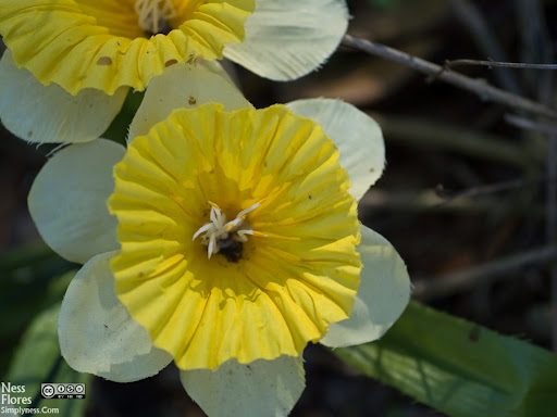 FloresSigma60mmF28-1220163
