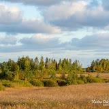 Тростниковые поля в Болдерае