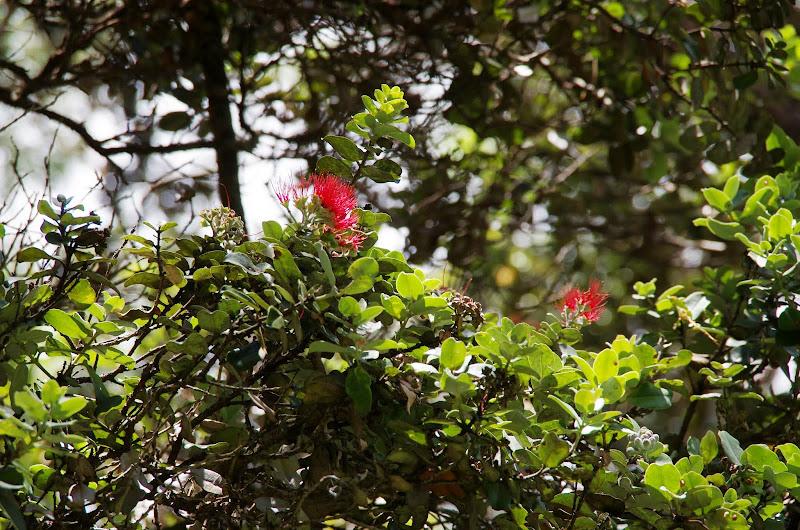 06-20-13 Hawaii Volcanoes National Park - IMGP7775.JPG