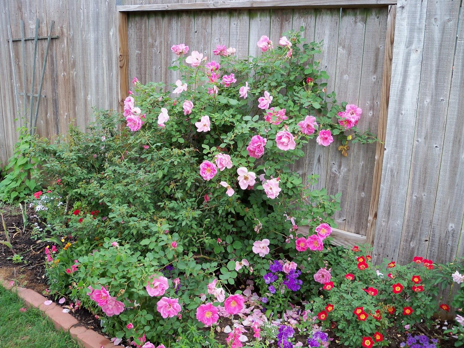 Gardening 2011 - 100_7329.JPG