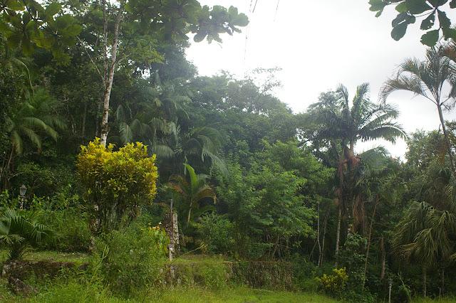 La forêt entourant le domaine d'Arariba (Ubatuba, SP), 24 février 2011. Photo : J.-M. Gayman