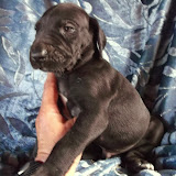 Available Black Male #2
