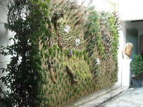 RESTAURANT A AVIGNON  FACADE VEGETALE 2008 .mur de plantes.murvégétal.mur fleuri.mursvégétaux.murs végétaliées.mur végétal interieur.mur végétale.mursvégétale.murfleuri.mur floral.mur de verdure