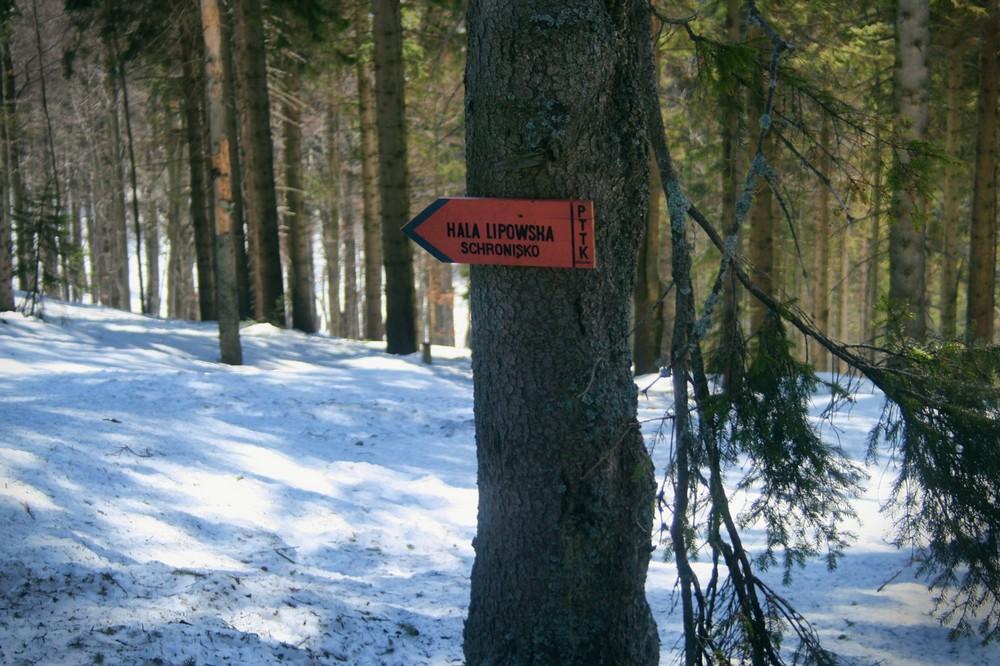 Szlak na Halę Lipowską