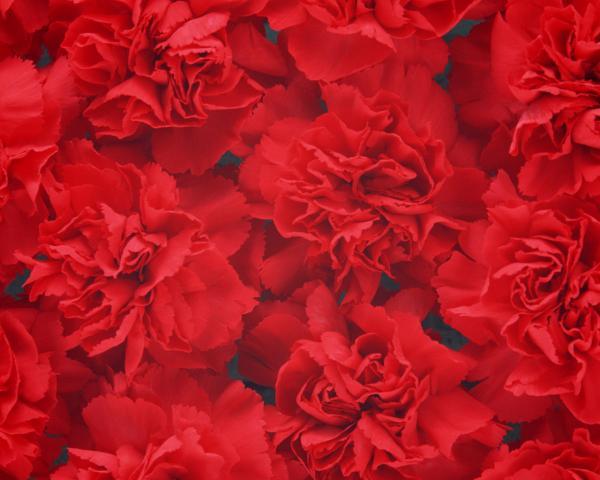 Blood Flowers, Bloody