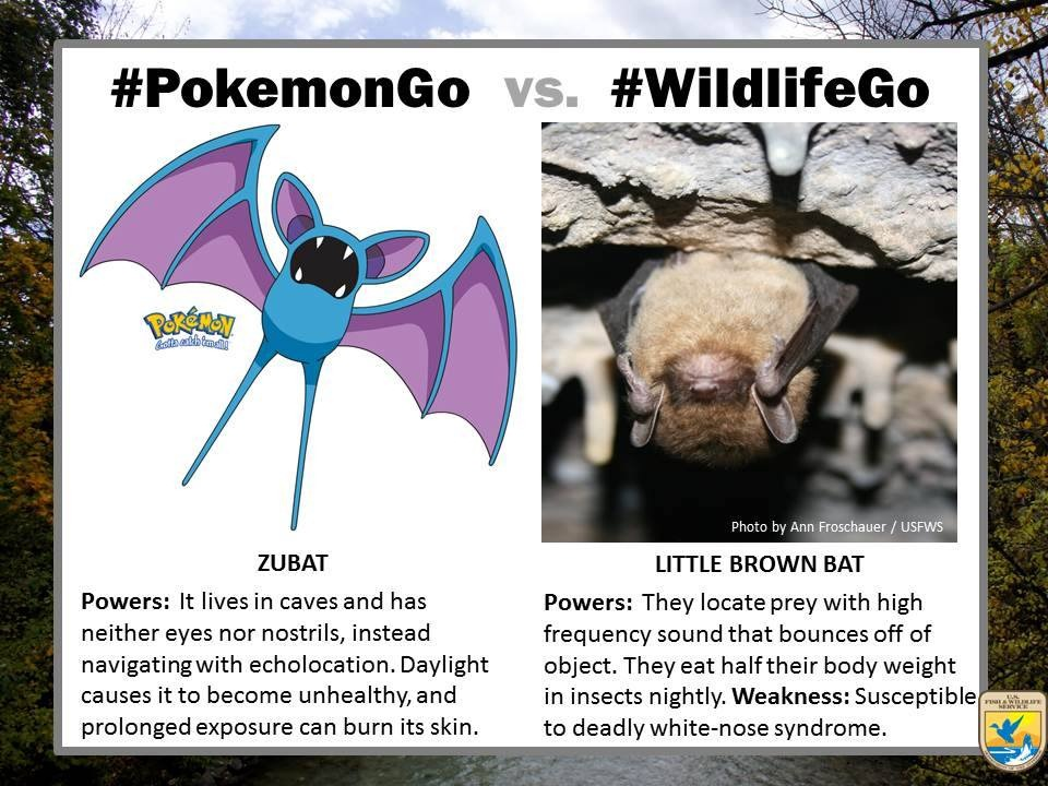 pokemongo-vs-wildlifego-10