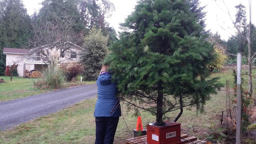 U Cut Christmas Trees.Lantzville U Cut Christmas Tree Farm Any Size Tree 30