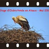stage Obérytmée-SELTZ en Alsace-mai 2014