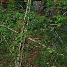 Taborjenje, Lahinja 2005 1. del - img_1055.jpg