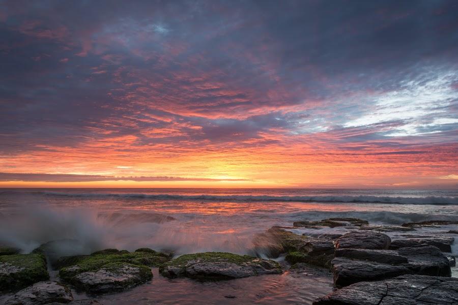 Shelly Beach Sunrise by Matthew Wood - Landscapes Sunsets & Sunrises ( clouds, waves, ocean, sunrise, beach, rocks, sun )