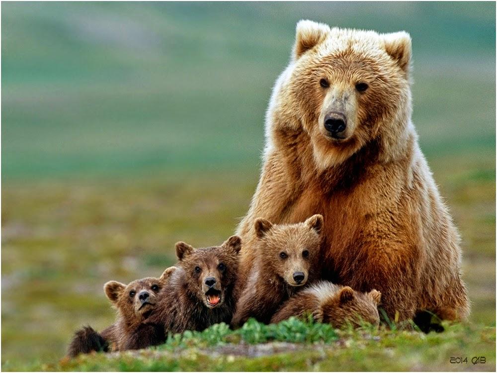 Day in Photos: Polar Bear Cubs, Janet Yellen, Festival of