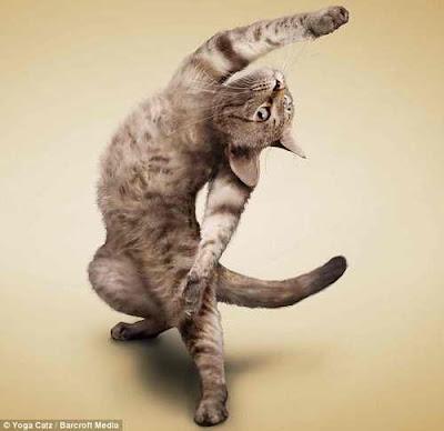 Кошка на зарядке