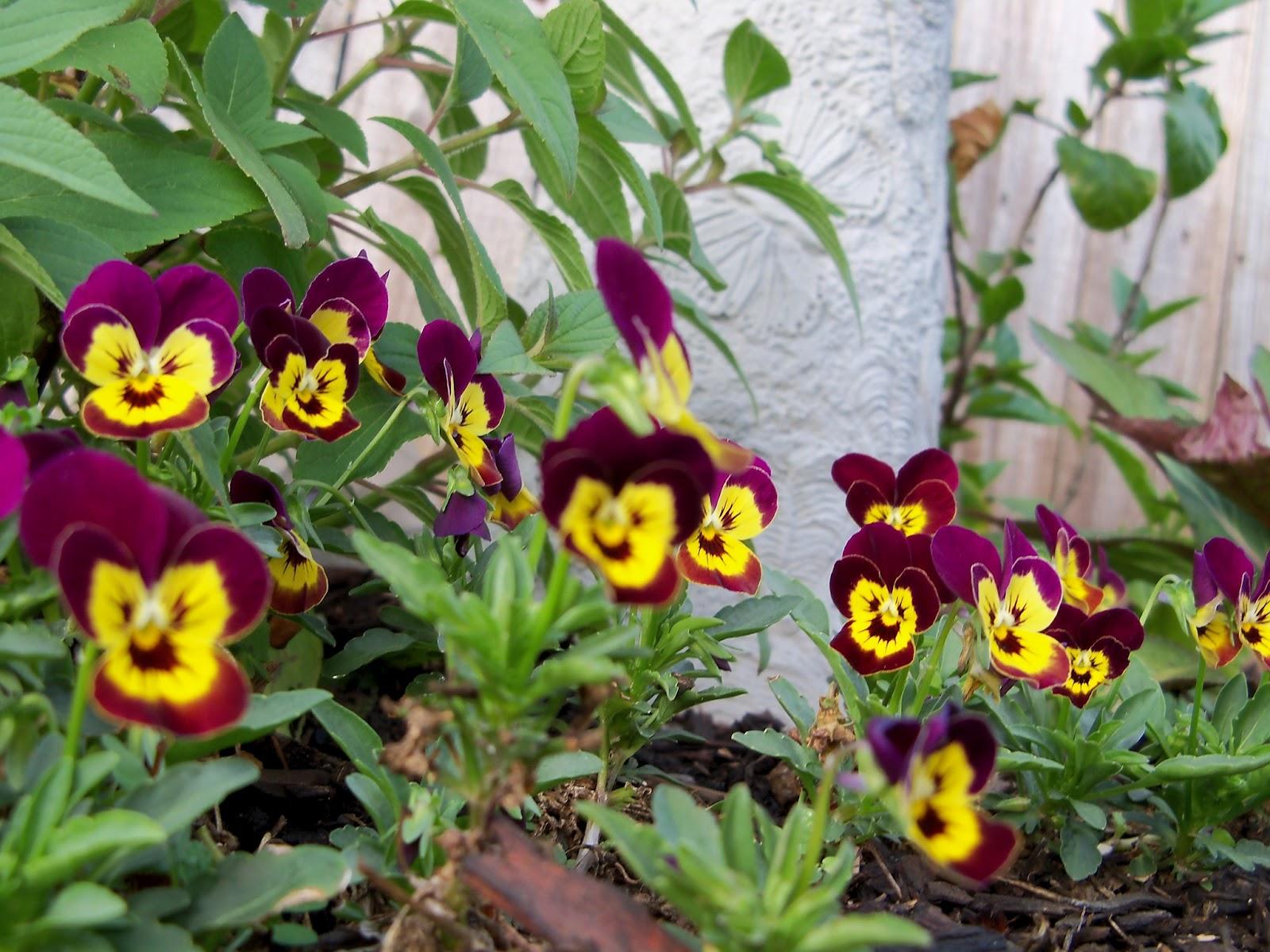 Gardening 2011 - 100_7121.JPG