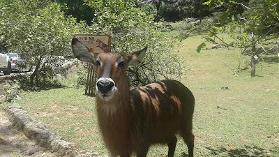 Salah Satu Koleksi Milik Taman Safari