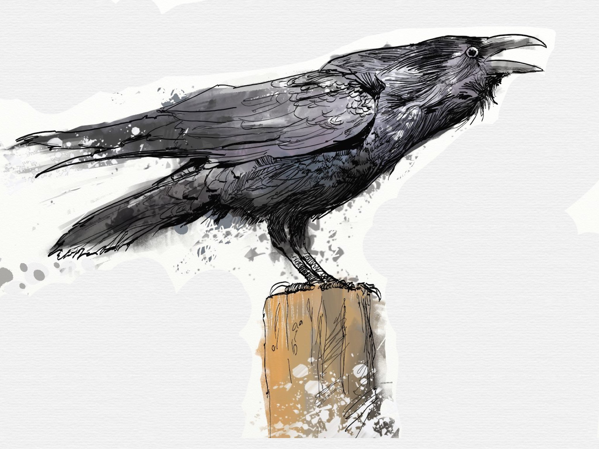 Crow made with Sketches